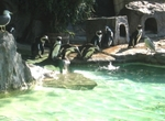 zoo_penguin1.jpg